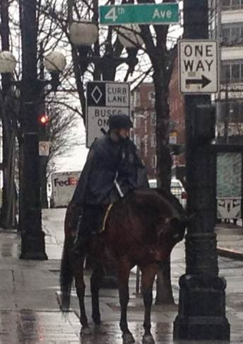rainy day police and horse