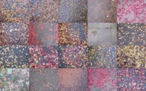 wet-autumnal-leaves-on-sidewalk-1024