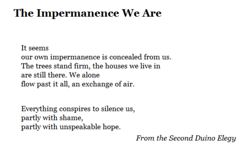 Impermanence We Are